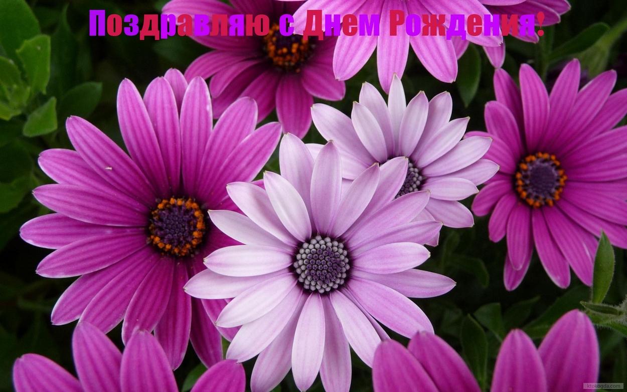 цветок фиолетовый  № 814231 бесплатно
