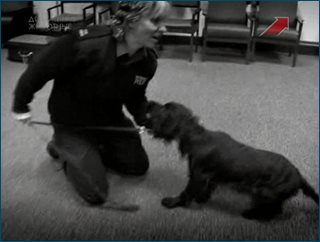 Собачий патруль / Send in the Dogs (Серии 1-12 из 12) (2008-2009) SATRip