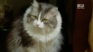 ������ ����� / Animal Planet: My Cat From Hell [5 ����� 1-17 �����] (2014) SATRip