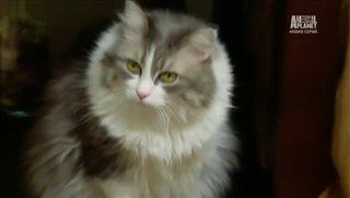 Адская кошка / Animal Planet: My Cat From Hell [5 сезон 1-17 серии] (2014) SATRip