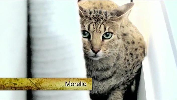 Animal Planet: Адская кошка / My Cat From Hell (5 сезон: 1-17 серии) (2014) SATRip