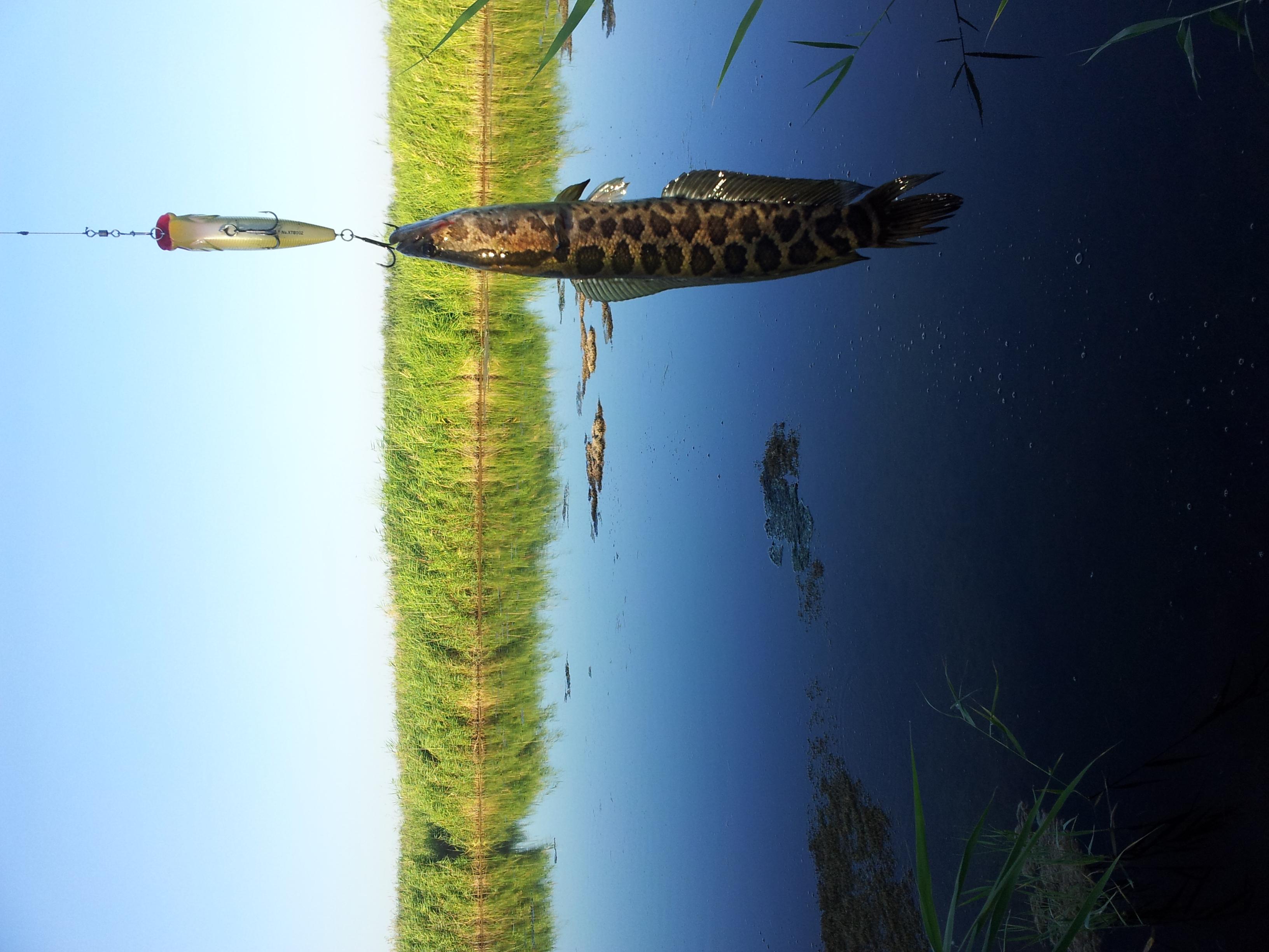 Фото узбекистанских писек 13 фотография