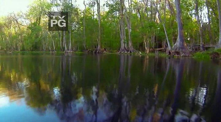 Дикая Флорида / Florida Untamed (1-2 серия из 2) (2013) HDTVRip