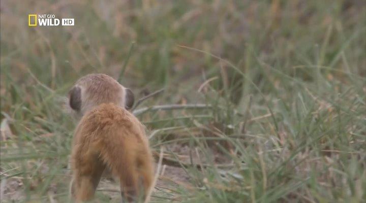 Дикая Калахари / Wild Kalahari (2013) HDTVRip