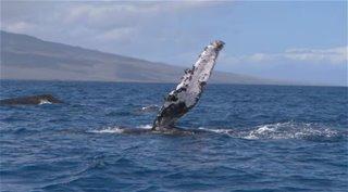 ������� ������� / BBC: Ocean Giants [01-03] (2011) BDRip
