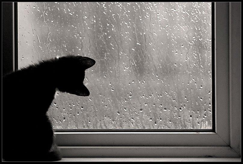 Песня капельку дождя к тебе постучал скачать