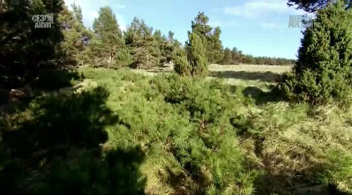 Animal Planet: Природа Великобритании с Реем Мирсом / Wild Britain with Ray Mears (1-10 серия) (2011) HDTVRip