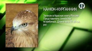 ���������� ������. ���� ����� (2011) HDTVRip �� HitWay