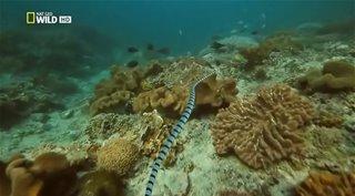 National Geographic. ��������� ����� �������: �������� ������ / Wildlife Collection: Venom Islands (2012) HDTVRip �� HitWay | DUB
