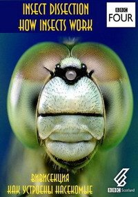 BBC. ����������. ��� �������� ��������� / Insect Dissection: How Insects Work (2012) HDTVRip �� GeneralFilm | D