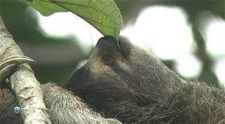 Мир живой природы VI / Чудеса природы / NHK. Nature Wonder Land VI [1-13 серии из 13] (2012) HDTVRip от GeneralFilm