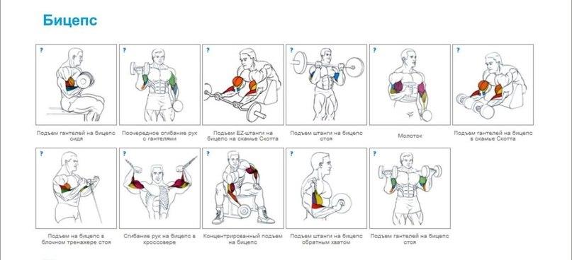 Упражнения на бицепс для мужчин в домашних условиях