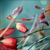 http://s7.hostingkartinok.com/uploads/images/2014/11/82b77a1ab5f78fe288208aeacfb1cc73.jpg