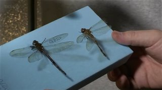BBC. ����������. ��� �������� ��������� / Insect Dissection: How Insects Work (2012) HDTVRip | DUB