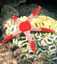 Что мы знаем о морских звёздах?
