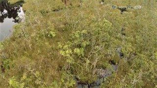 Discovery. Съеденный заживо / Anaconda: Eaten Alive (2014) HDTV 1080i от GeneralFilm