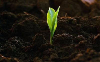 биопрепараты для роста растений