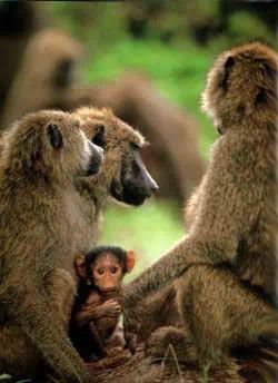 Про животных короткой строкой