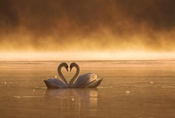 Закоханість і любов