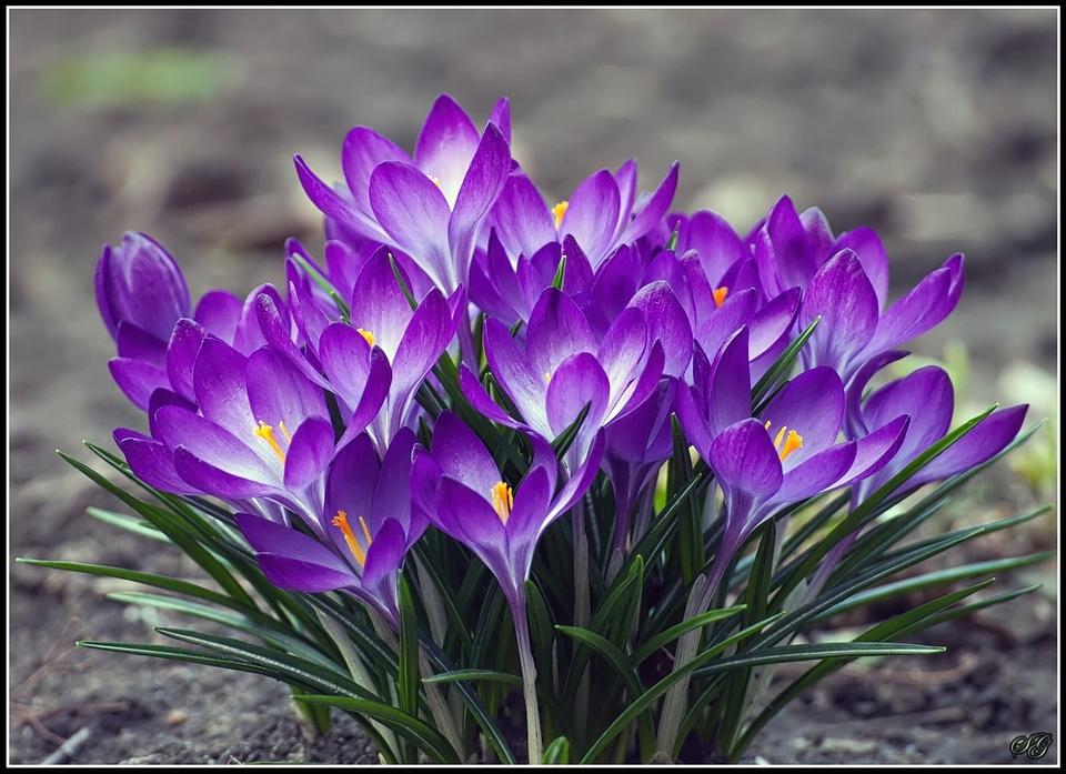 http://s7.hostingkartinok.com/uploads/images/2015/04/a9bed34358f2c81b301b0d8b86b45aa6.jpg