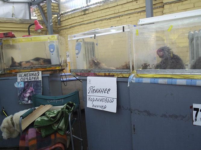 рынок юнона. рыбалка