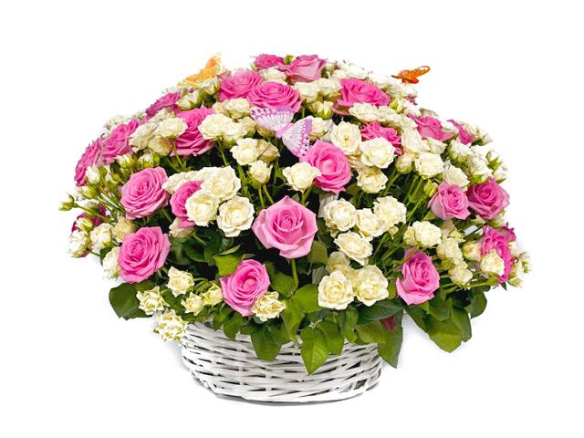 А розы-то «золотые»