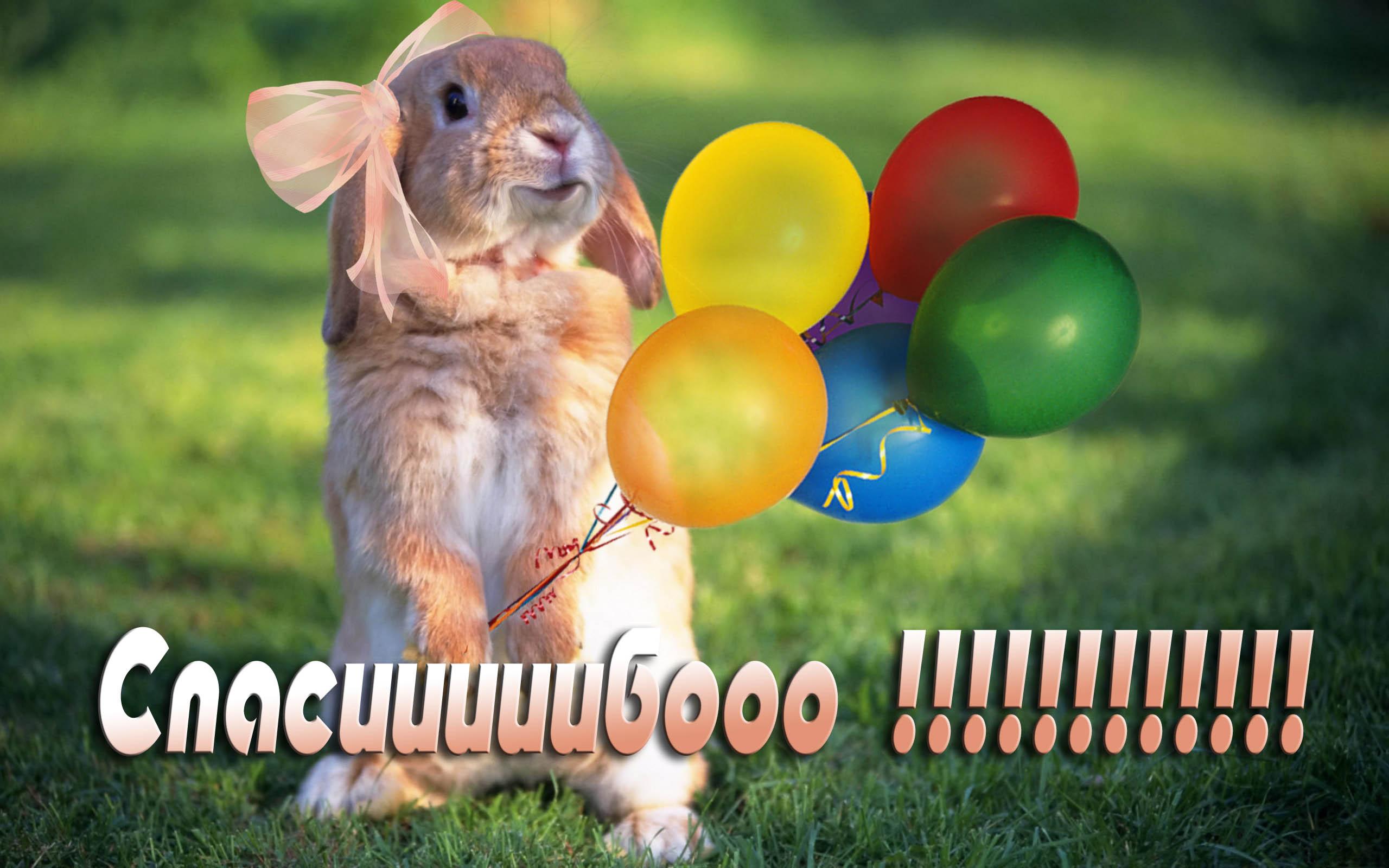 Поздравления с днем рождения дашулька