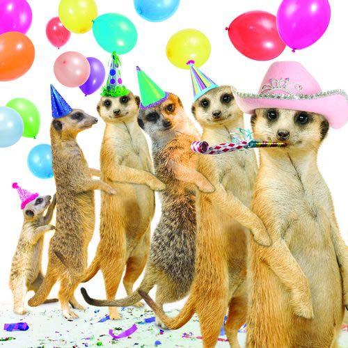 Поздравление от животных на день рождения