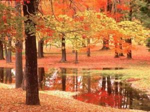 Осенняя болталка - Страница 39 D93e0806cb9f661d2e60b6afb12a4a48