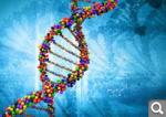 Генетикалық код. Генетикалық кодтың қасиеттері. Нәруыздың биосинтезі. Транскрипцияның реттелуі.