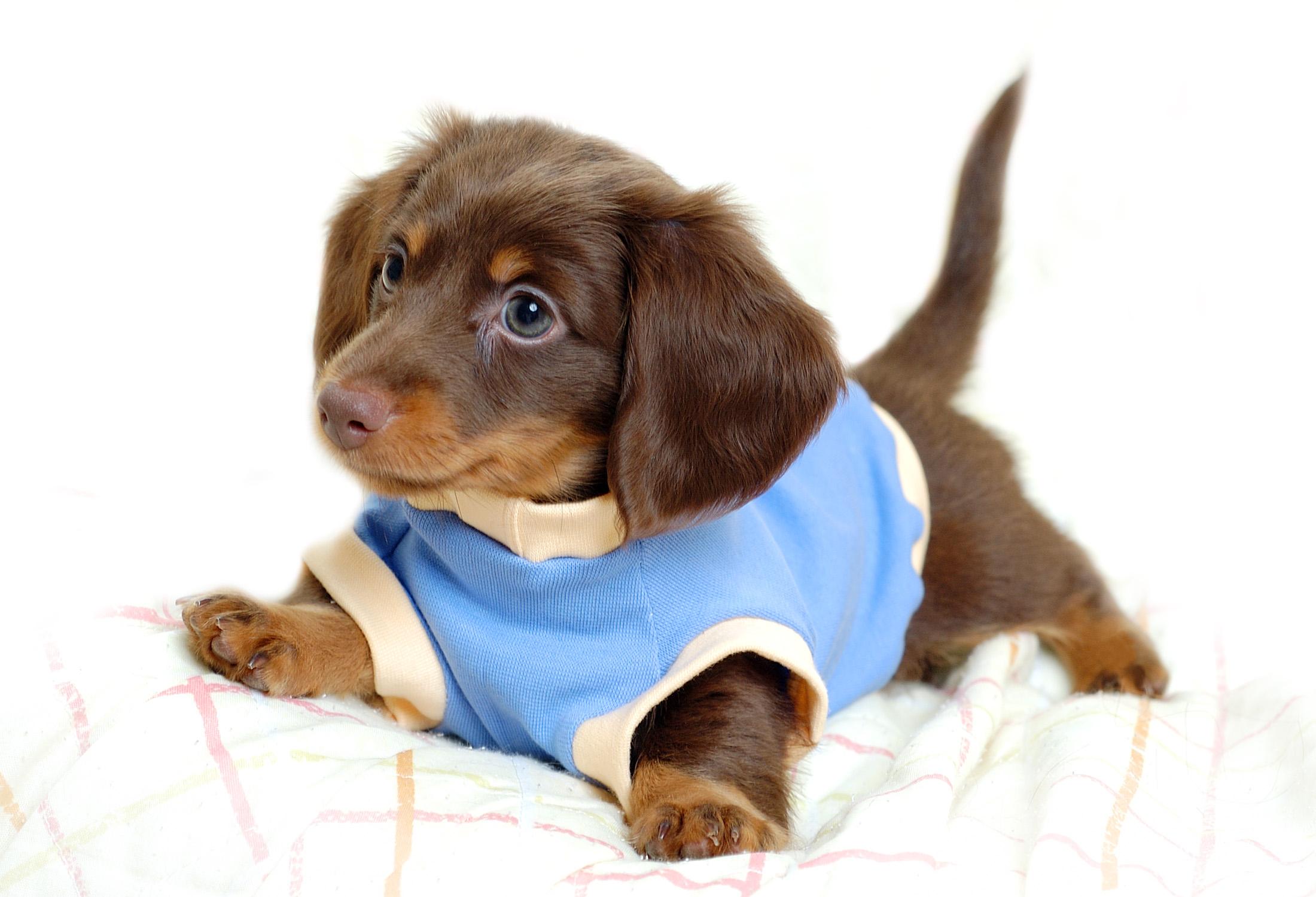 Dog Supplies  Dog Products  Dog Accessories  Dogcom