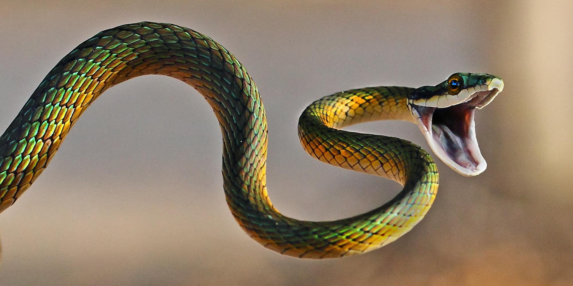 87 10 2317 Snake Um dos maiores clássicos dos games está aqui no Mania de Jogos! Controle a cobrinha nos Jogos de Snake e tenha muito cuidado para não se