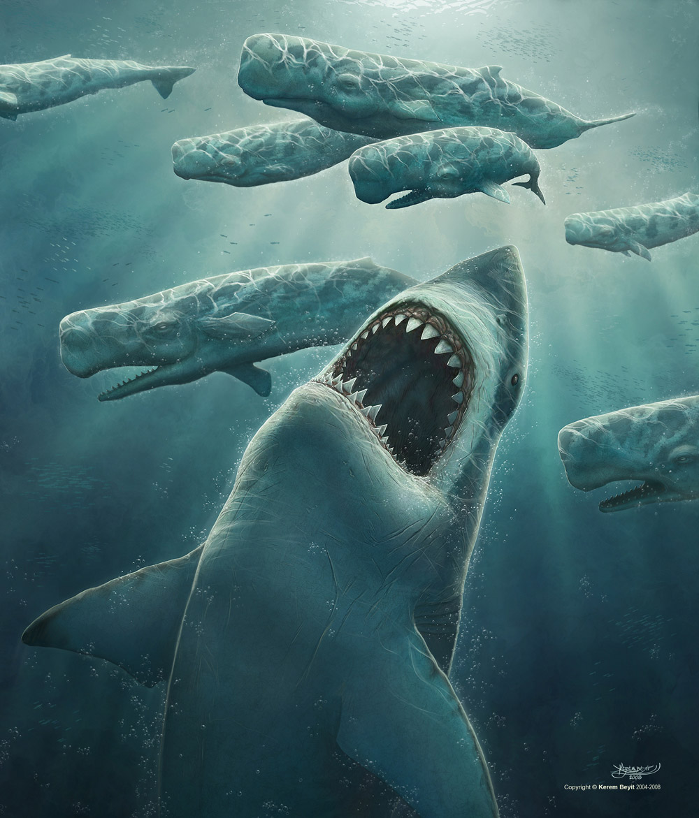 megalodon shark pictures - HD 1000×1171