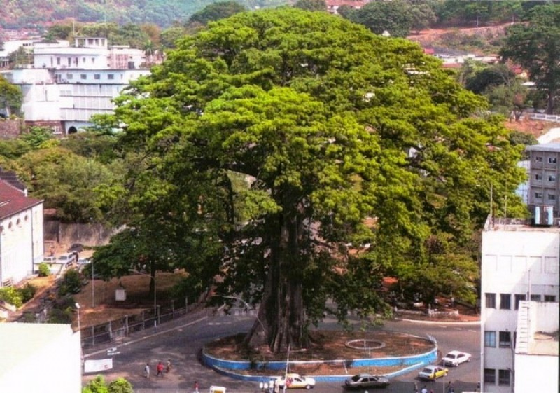 cotton-tree-freetown-2.jpg