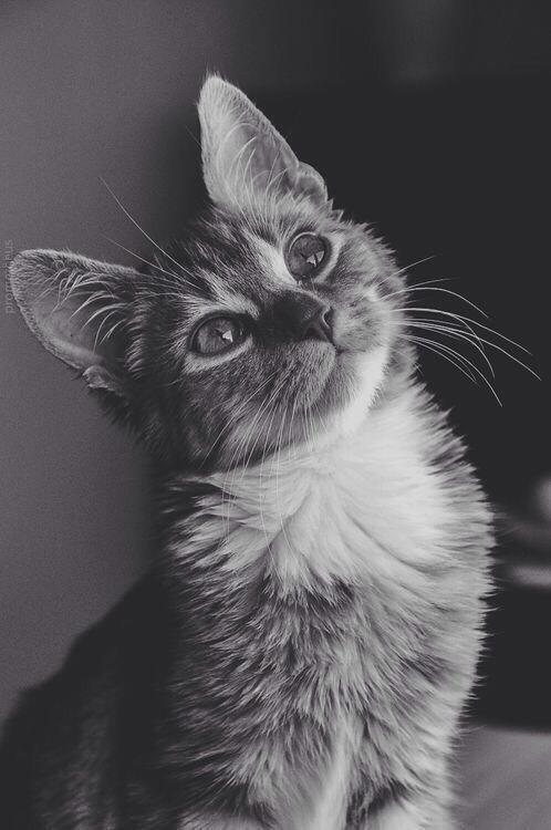 Картинки кошек тамблер
