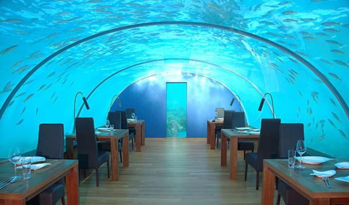 Red-Sea-Star-Underwater.jpg