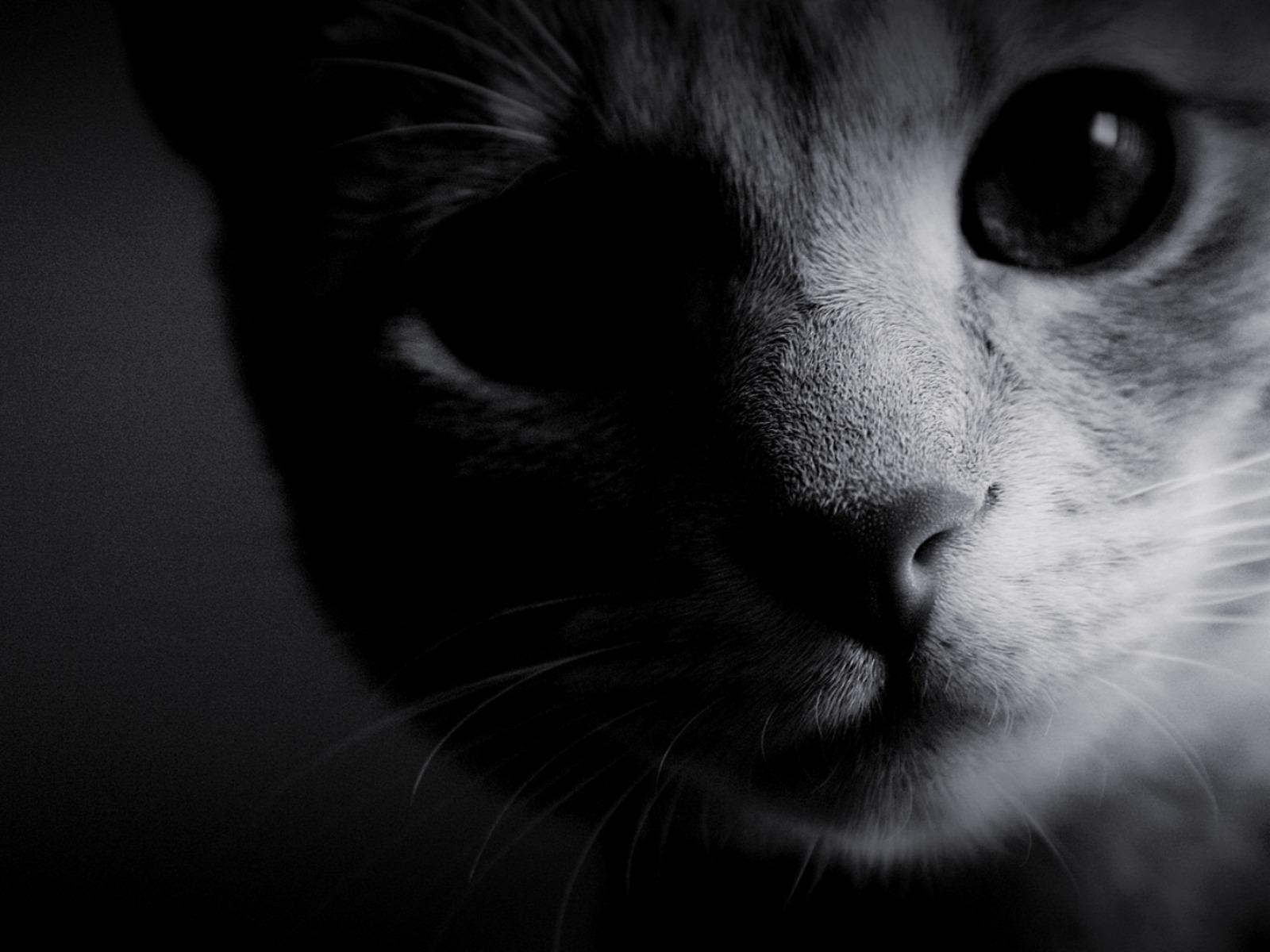 Белый котенок в темноте без смс