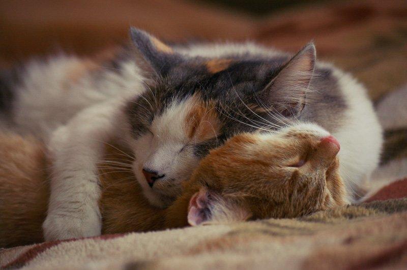 потом вся картинки животные спят вдвоем жизни