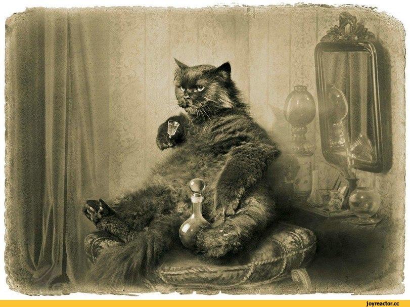 psychoanalyzing the black cat