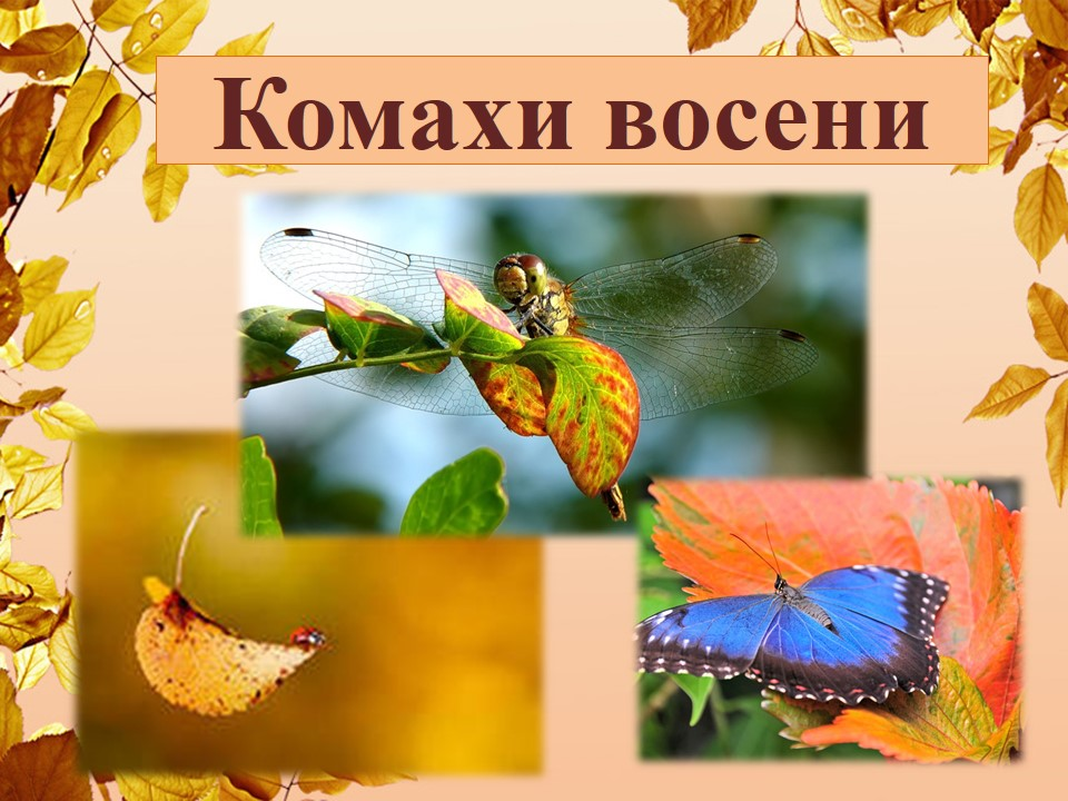 ПРЕЗЕНТАЦІЯ комахи.jpg