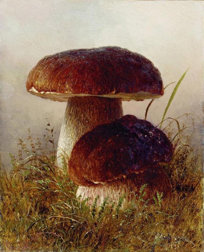 я Белые грибы Этюд Картон масло 202 x 162 Николаев.jpeg